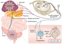 Non-canonical cholinergic anti-inflammatory pathway in IBD